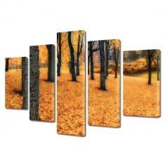 Tablou Multicanvas 5 Piese Toamna in padure - Tablou canvas
