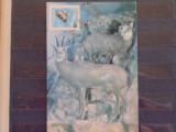MUZEUL DE ISTORIE NATURALA - DIORAMA VIATA PE CULMILE RETEZATULUI - CAPRE NEGRE, Necirculata, Fotografie
