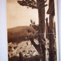 Carte postala - Poza - Poiana Tapului - Zamora - Carte Postala Banat dupa 1918, Circulata, Printata