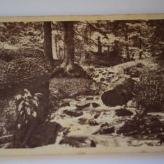 Carte postala - Poza - Idila spre Paltinis - Carte Postala Banat dupa 1918, Circulata, Printata