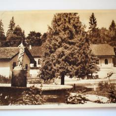 Carte postala - Poza - borsec - Carte Postala Banat dupa 1918, Circulata, Printata