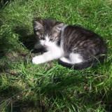 Ofer spre adoptie 2 pui de pisica de 3 luni