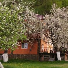 CAZARE ZONA BRAN-MOECIU - Turism munte Romania