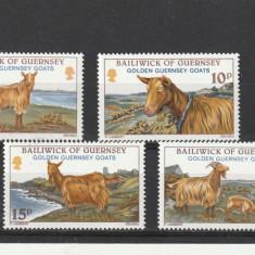 Fauna ,capre,,Guersney., Nestampilat