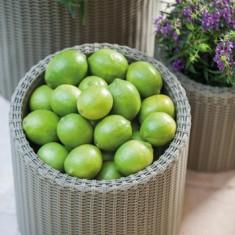 Ghiveci rotund mare CURVER - Pomi fructiferi