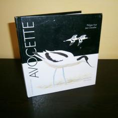 Avocette-Editions Hesse, carte in limba franceza! - Carte in franceza