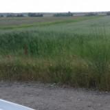 Teren - Teren de vanzare, 5000 mp, Teren intravilan