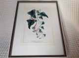 Litografie Horto van Houtteano, sec XIX