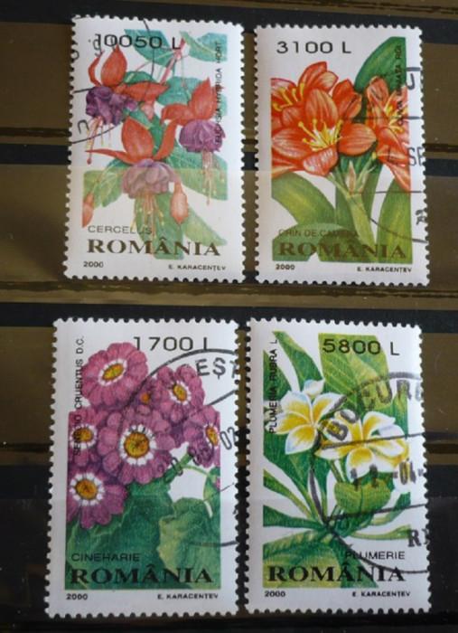 ROMANIA 2000 – PLANTE DE APARTAMENT, serie stampilata AM23 foto mare