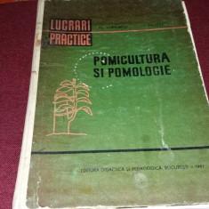 FL LUPESCU - POMICULTURA SI POMOLOGIE LUCRARI PRACTICE