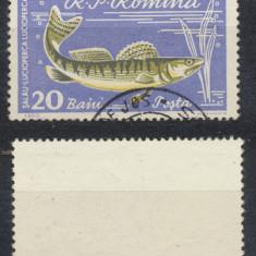 Romania 1962 Piscicultura eroare 20 Baini stampilata stare foarte buna - Timbre Romania, Natura