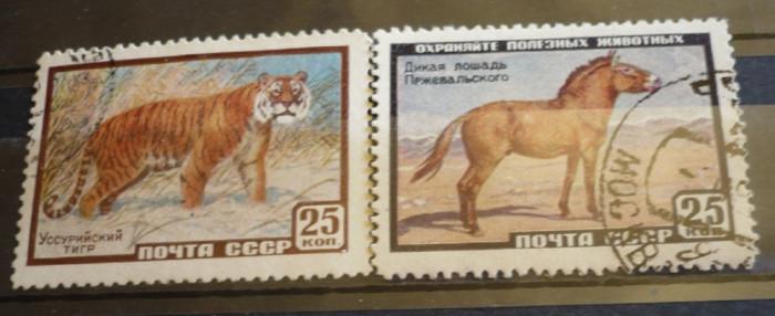 RUSIA 1959 – TIGRUL SIBERIAN SI CALUL SALBATIC, serie stampilata, AM32 foto mare