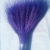Plante naturale uscate - grau vopsit MOV aprins - buchet 50-70 fire