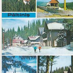 bnk cp Paltinis - Vedere - circulata