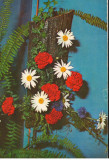 CPI (B8770) CARTE POSTALA - ARANJAMENT FLORAL. GAROAFE, CRIZANTEME, Necirculata, Fotografie