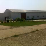 3 hale renovate cu platforma betonata in curteproprie Mangalia - Spatiu comercial de inchiriat
