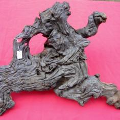 Radacina sculptura in lemn arta abstracta 21x44 cm, Abstract, Europa