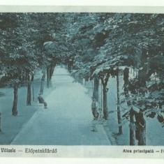 Valcele(Covasna) 1935 - alea principala - Carte Postala Transilvania dupa 1918