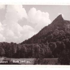 Baia Mare 1940 - Gutin 1447 mtr, ilustrata - Carte Postala Transilvania dupa 1918