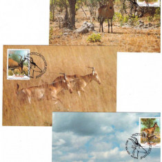 Mozambique 1991 - Fauna WWF, 3 maxime