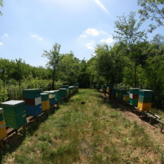 100 familii albine - Apicultura