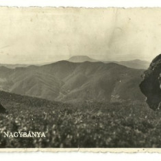 Baia Mare 1946 - Gutin - Carte Postala Maramures dupa 1918