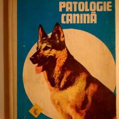 E. Carnatiu, s.a. - Patologie canina
