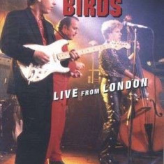 Fabulous Thunderbirds - Live From London ( 1 DVD ) - Muzica Blues