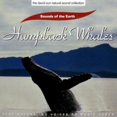 Sounds of the Earth - Humpback Whales ( 1 CD ) - Muzica Ambientala