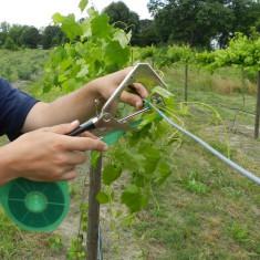 Aparat de legat vita de vie rosii plante Cleste palisat via cu banda