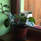 Plante Ornamentale ideale pentru interior.