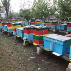 Vand 28 familii albine cu stup vertical - Apicultura