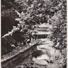 Bnk cp Slanic Moldova - Aleea izvoarelor - circulata - Carte Postala Moldova dupa 1918, Printata