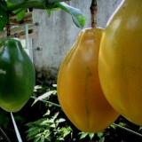 Seminte rare de Passiflora Alata -fruct al pasiunii- 3 seminte pt semanat