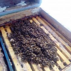 30 familii de albine - Apicultura