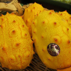 Seminte rare de castravete fruct Kiwano Gigant - 3 seminte pt semanat