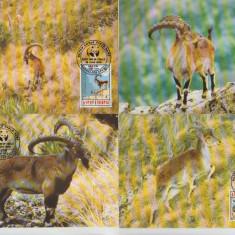Etiopia 1990 - capra de munte, serie maxima