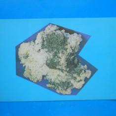 HOPCT 27643  STIBINA -MUZEUL STIINTELE NATURII CRAIOVA-JUD DOLJ-NECIRCULATA