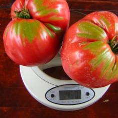 Seminte rare de rosii Inima de Bou - 5 seminte pentru semanat - Seminte rosii