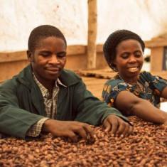 Seminte rare de Fasole de Congo - 5 seminte pt semanat