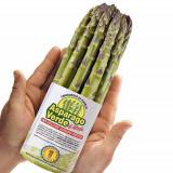 Seminte rare de Asparagus comestibil - 5 seminte pt semanat