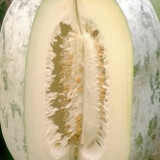 Dovleac de ceara - Benincasa hispida 5 seminte - Seminte de dovleac