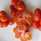 Seminte rare de rosii Voyage - 5 seminte pentru semanat - Seminte rosii