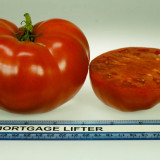 Seminte rare de Rosii Mortgage Lifter - 5 seminte pt semanat - Seminte rosii