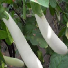Vinete albe lungi 15 seminte