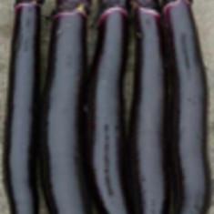 Vinete lungi negre 15 seminte