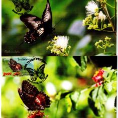 INDONEZIA 2016, CM, Fauna - Fluturi, Asia
