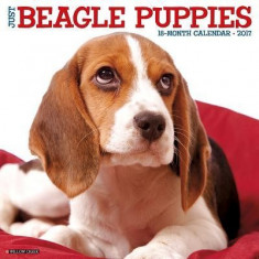 Just Beagle Puppies - Carte in engleza