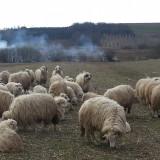 Oii - Oi/capre