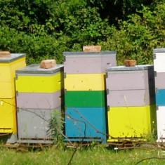 Lazi albine - Apicultura